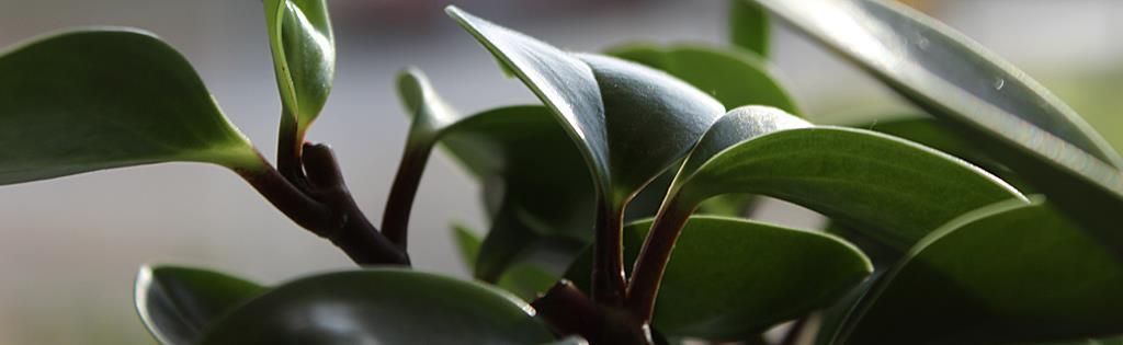 L 39 achat des plantes d 39 int rieur - Plante de l interieur ...