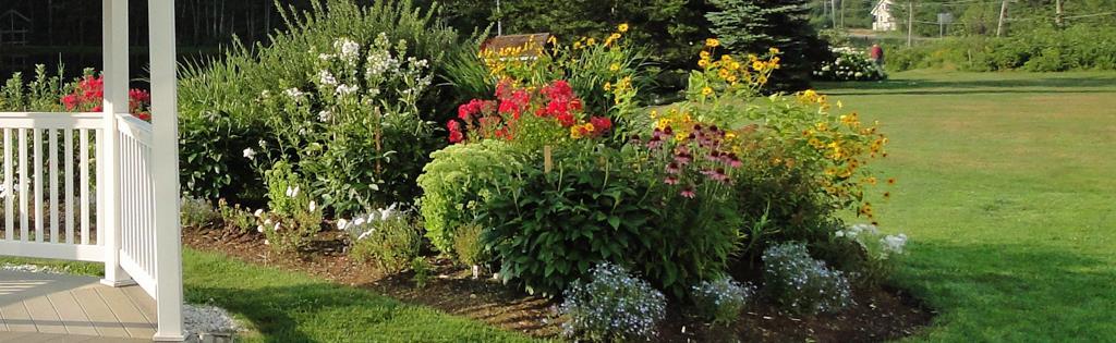 Plantes et fleurs vivaces pour toutes les occasions for Les plantes vivaces