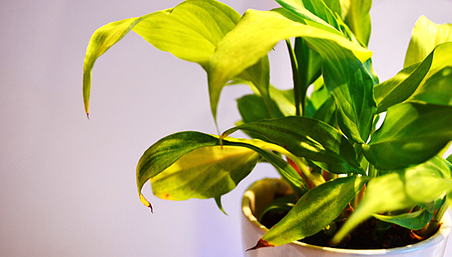 les plantes d 39 int rieur lumi re et humidit botanix. Black Bedroom Furniture Sets. Home Design Ideas