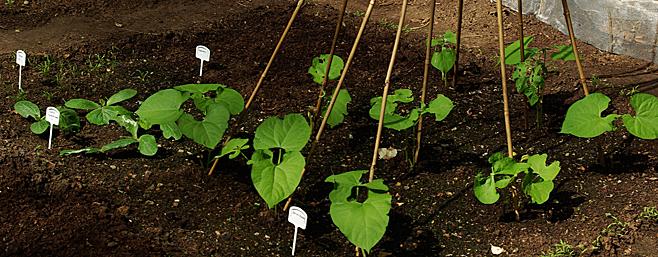 Planifier le potager pour légumes et herbes délicieux
