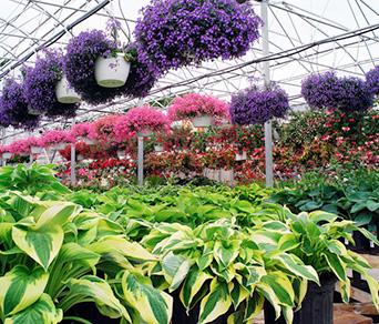 Arbres pour petits et grands jardins botanix for Conseil de jardinage
