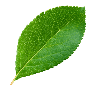 right-leaf