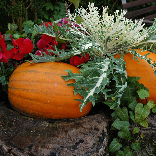 Indian Summer Flower Arrangements