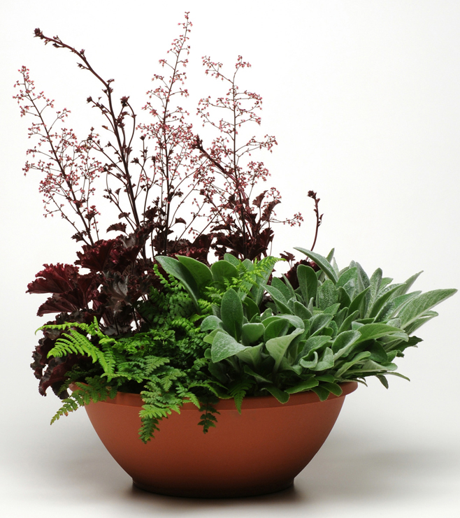 Patte-de-velours-vivaces-pot-fleur-plante