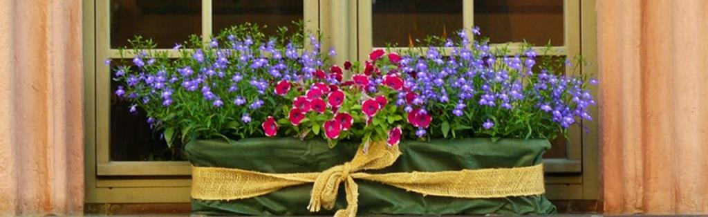 Planting Annuals In Containers Botanix