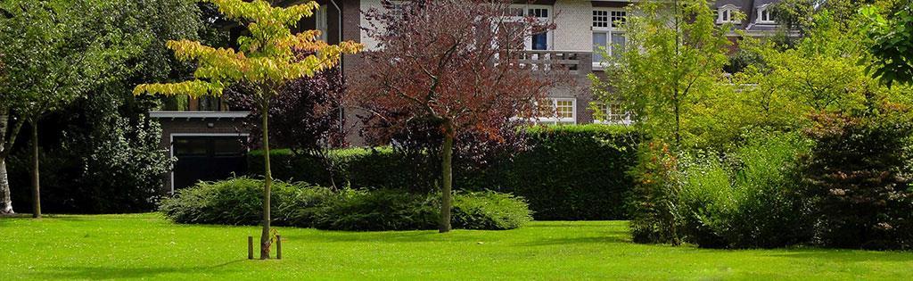 Narrow trees free prelit narrow augusta pine artificial for Jardin etroit long