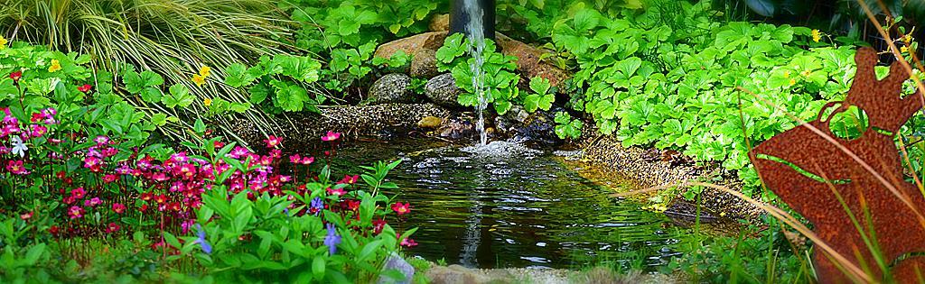 Entretien plante de bassin for Plante bassin poisson
