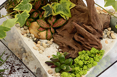 creer-terrarium-miniature