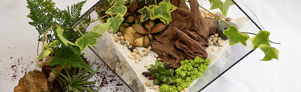 cr er un terrarium avec succulentes et plantes grasses. Black Bedroom Furniture Sets. Home Design Ideas