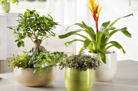 pot-plante-couleur-interieur-exterieur-mini-2
