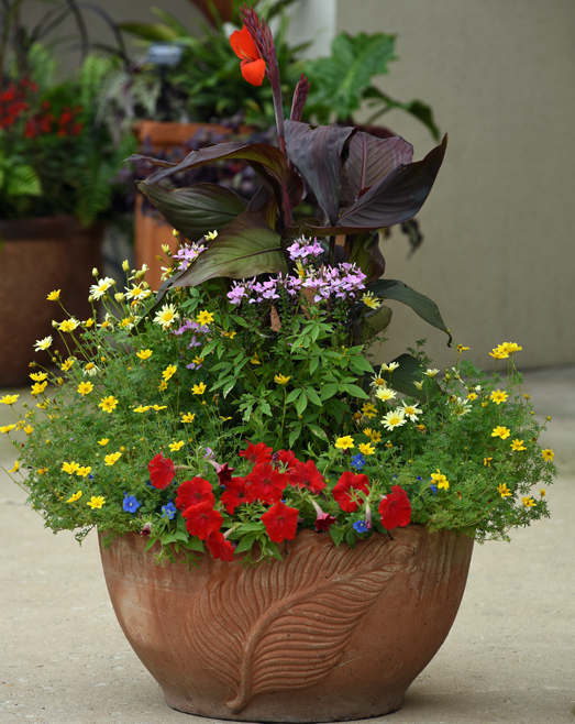 agencement-pot-fleur-annuelle-air-ete
