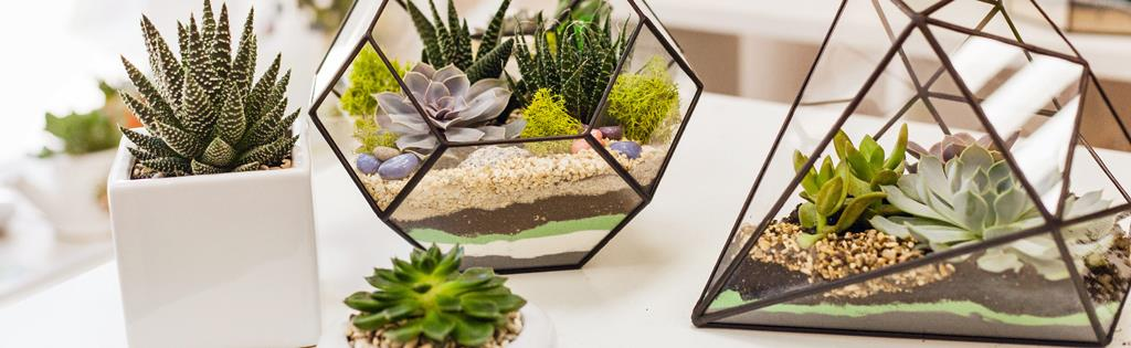 Make Your Own Terrarium With Succulents