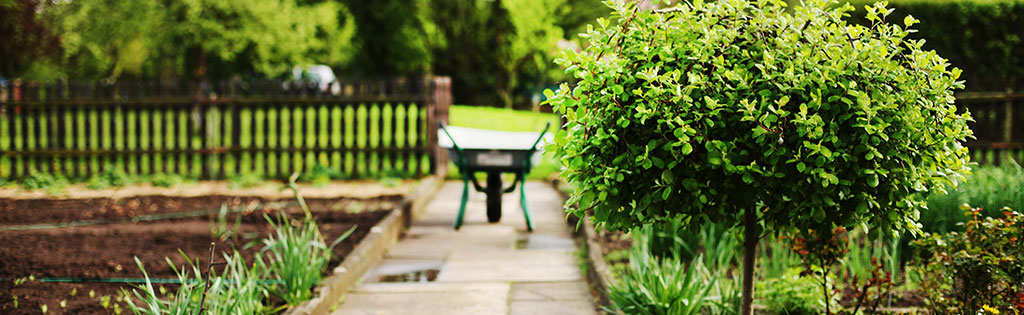 Arbres pour petits jardins botanix - Quel arbre pour petit jardin ...