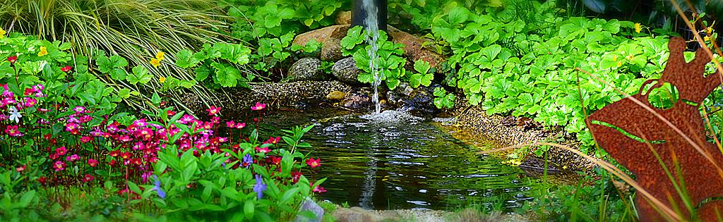 jardin aquatique entretien du bassin d 39 eau et plantes. Black Bedroom Furniture Sets. Home Design Ideas