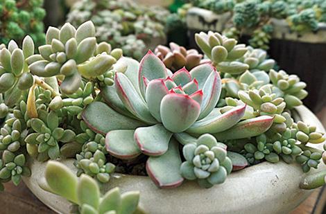 Plante exterieur toute saison les plantes pour un mur for Tailler yucca exterieur