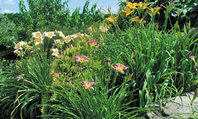 Une question d quilibre for Catalogue de plantes vivaces