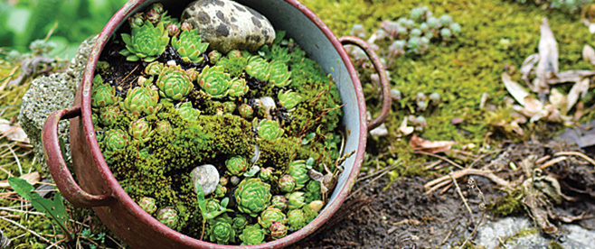 Create a garden with succulents