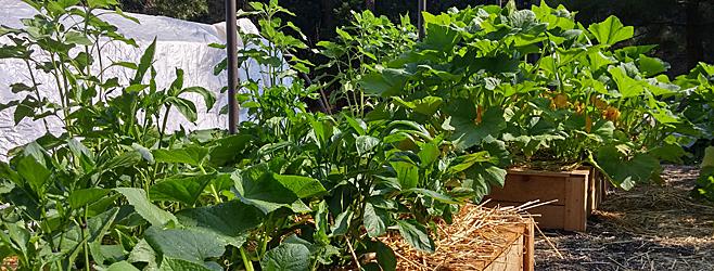 Planifier Le Potager Pour Legumes Et Herbes Delicieux