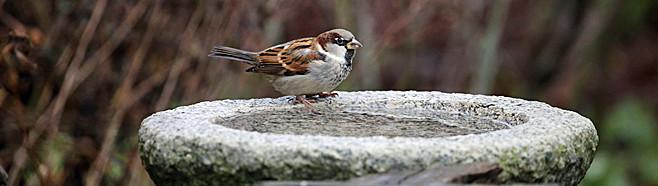 Ornithologie attirer les oiseaux dans le jardin - Faire fuir les oiseaux dans un jardin ...