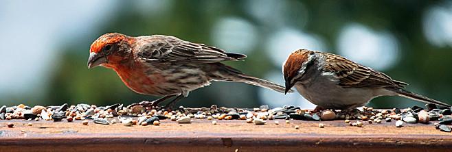 Ornithologie - attirer les oiseaux dans le jardin