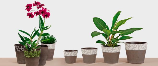La forme - Plante depolluante d interieur ...